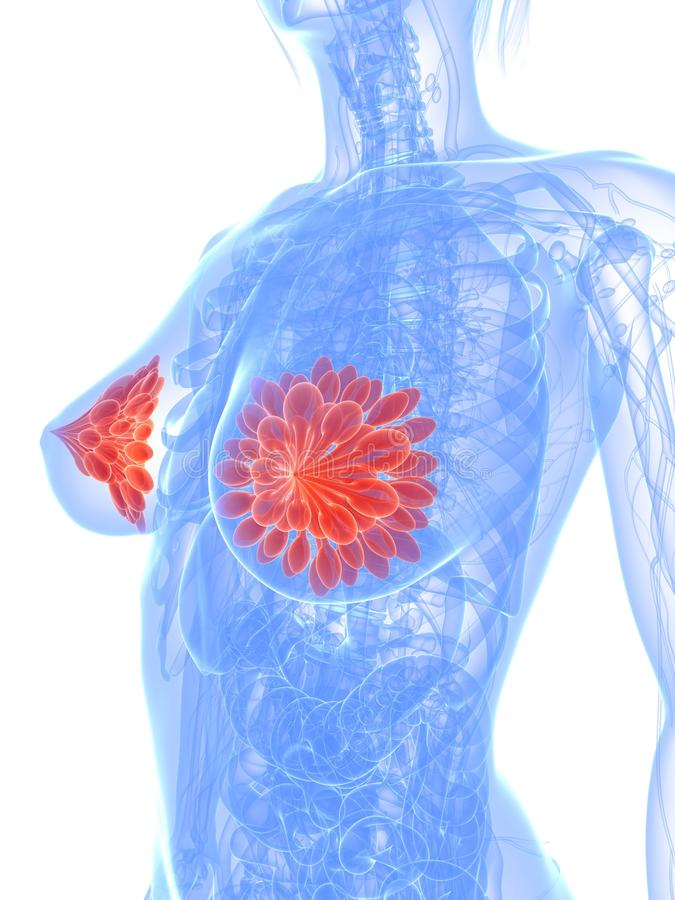 Brustkrebs vektor abbildung