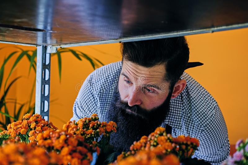 Brutal bearded flower seller with tattoos on his arms in a flowe. R shop stock images