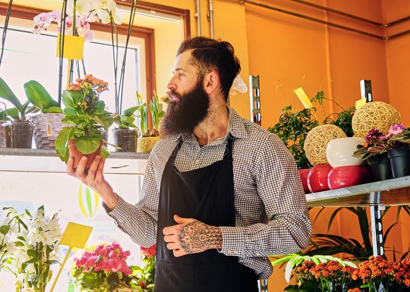Brutal bearded flower seller with tattoos on his arms in a flowe. R shop royalty free stock photo