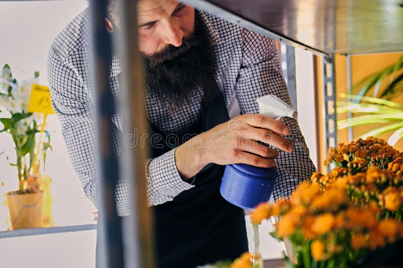 Brutal bearded flower seller with tattoos on his arms in a flowe. R shop stock photography