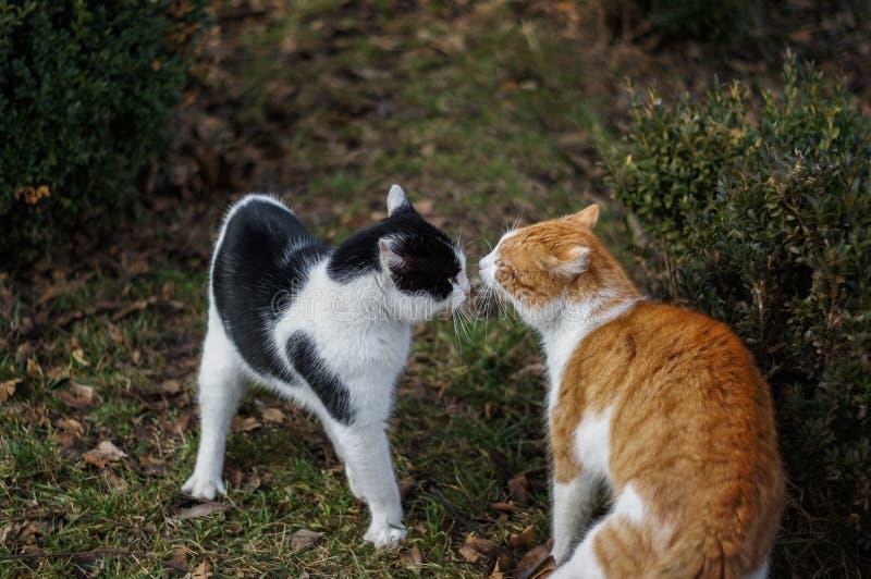 Brutal kamp av 2 katter royaltyfria foton