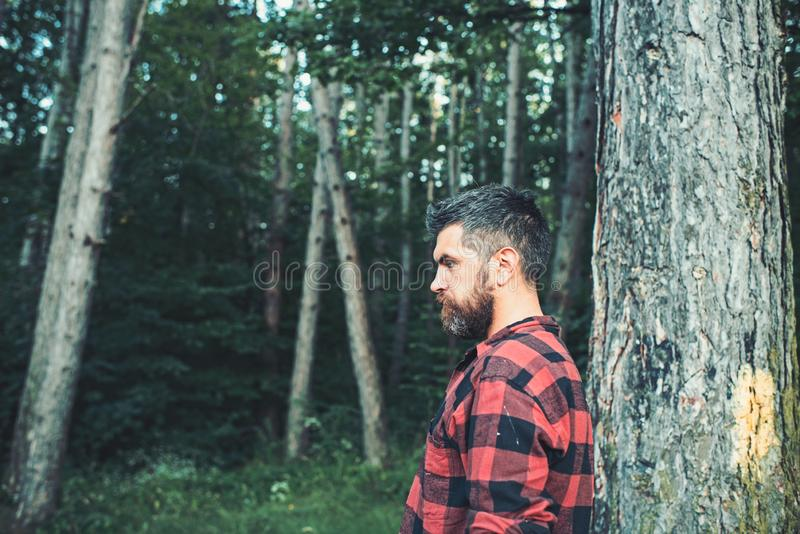 Brutal man with stylish beard and mustache wandering in woods. Side view lumberjack walking around forest. Environment. Nature and leisure activity concept royalty free stock photography