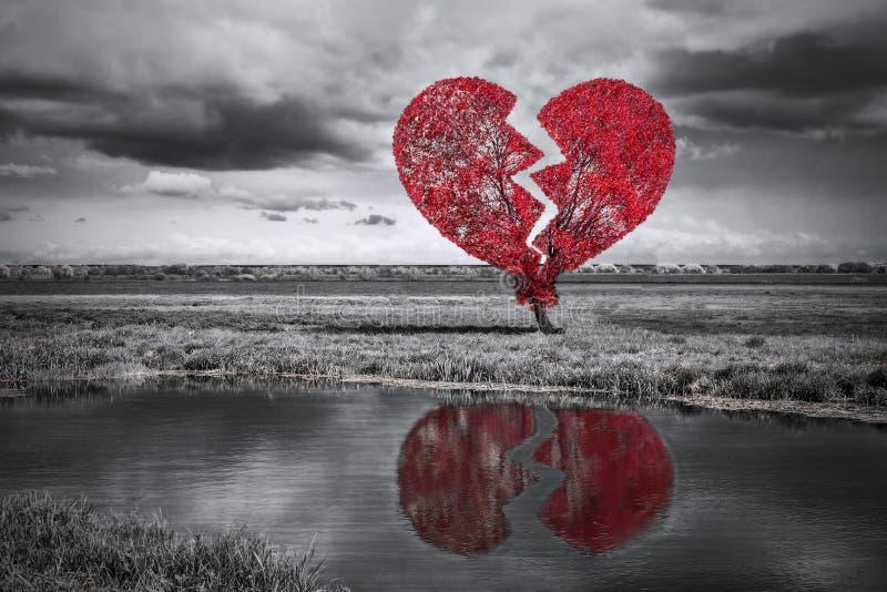 Bruten hjärtatree. Svartvitt arkivfoton