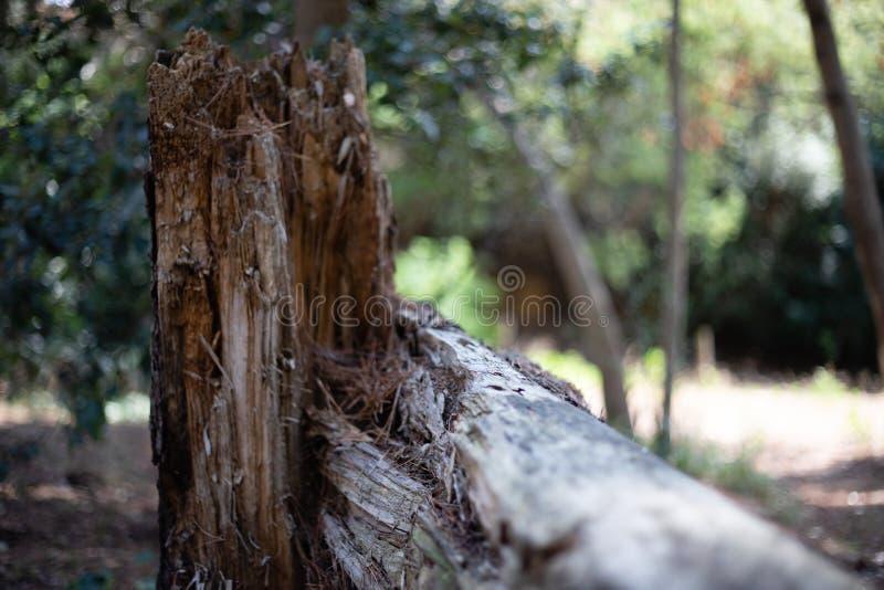 Bruten tr?dstam i en skog arkivfoton