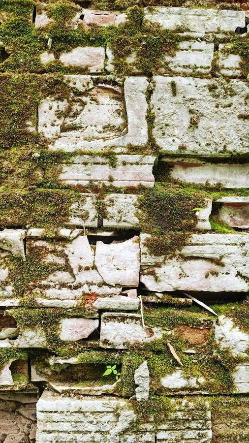 Bruten vägg av övergiven byggnad som täckas med grön mossa Grunge utformar arkivbild