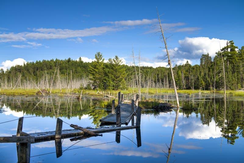 Bruten wood bro på skogsjön royaltyfri fotografi