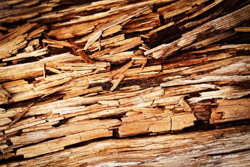 Brutet ruttet trä royaltyfria bilder