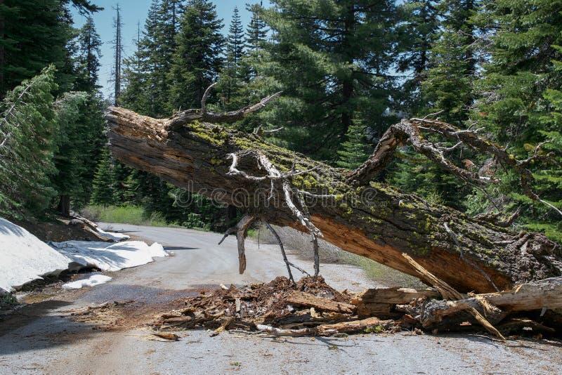 Brutet sörja trädet som blockerar vägen arkivbilder