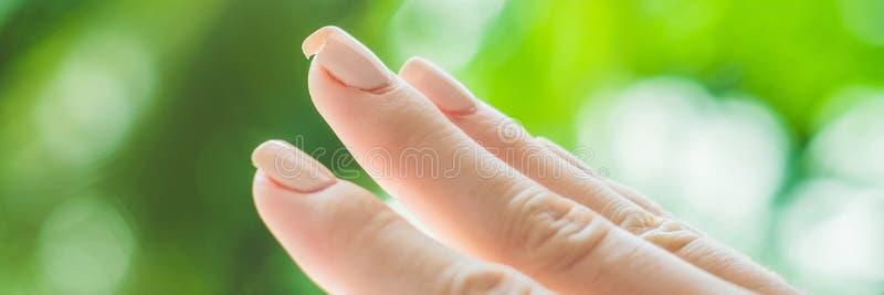 Brutet spika på en hand för kvinna` s med en manikyr på ett grönt bakgrundsBANER, långt format arkivfoton