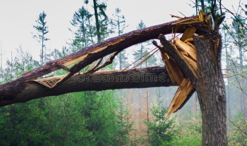 Brutet tr?d i skogen royaltyfri foto