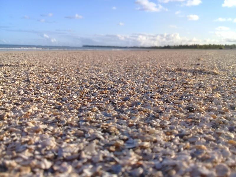 Brutna skal på stranden med fokusen och blå himmel arkivbilder