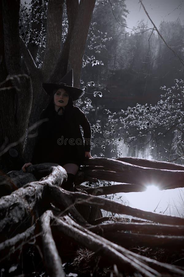 Bruxa na floresta aguçado preta do chapéu fotos de stock