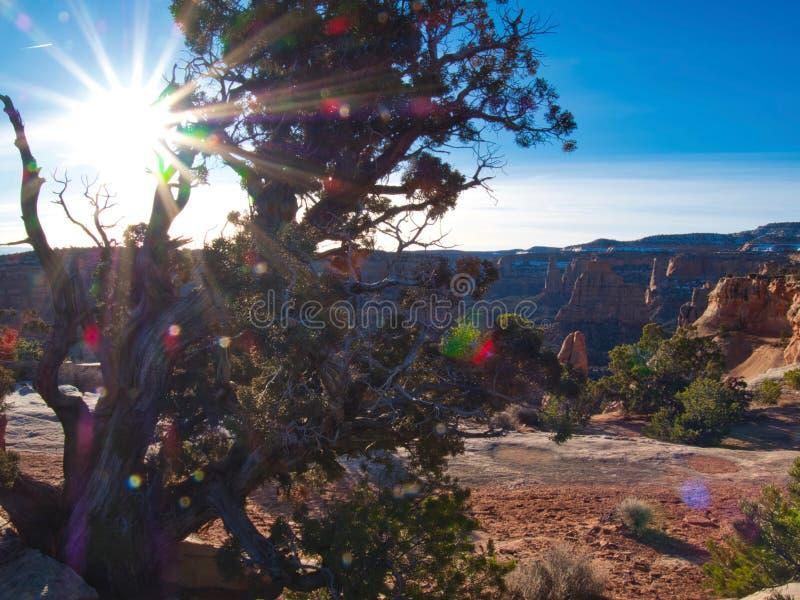 Bruxaria do deserto da manhã fotografia de stock