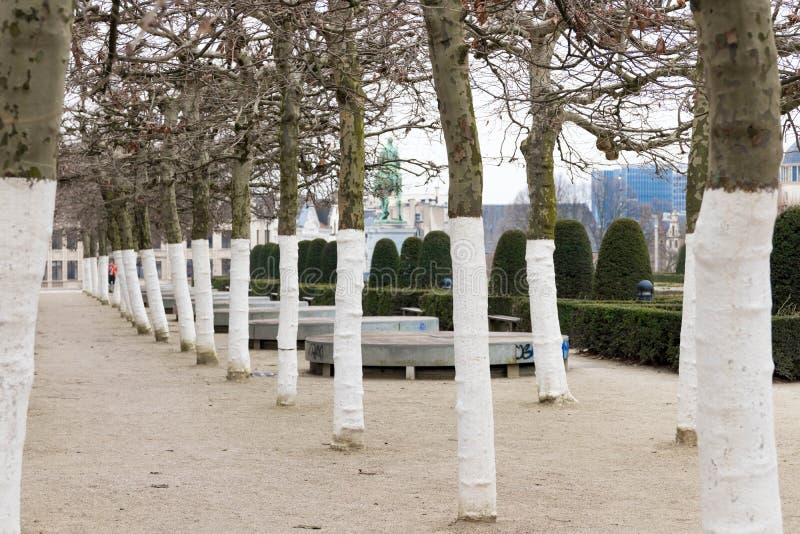 Bruxelles/Belgium-01 02 19 : Arbres sur le bâti des arts Bruxelles photo stock