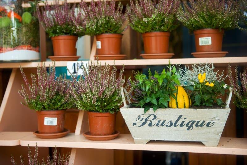 Bruyère dans le flowershop image libre de droits