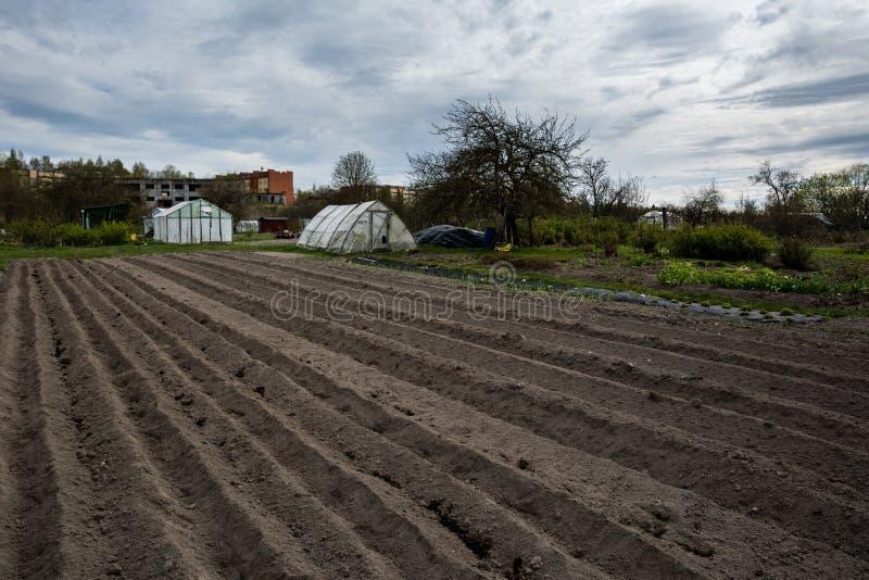 Bruzda rzędy z grulami właśnie zasadzać w organicznie rodzina ogródzie obrazy royalty free