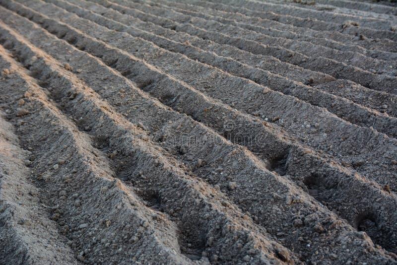 Bruzda wiosłuje z grulami właśnie zasadzać w organicznie polu organicznie zdjęcia royalty free