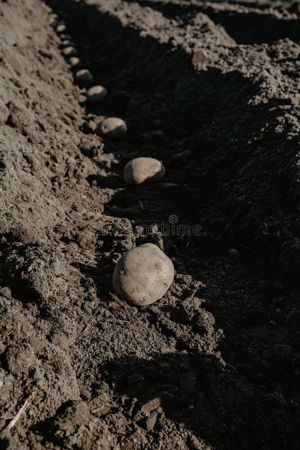 Bruzda wiosłuje z grulami w organicznie polu przygotowywającym dla zasadzać obraz royalty free