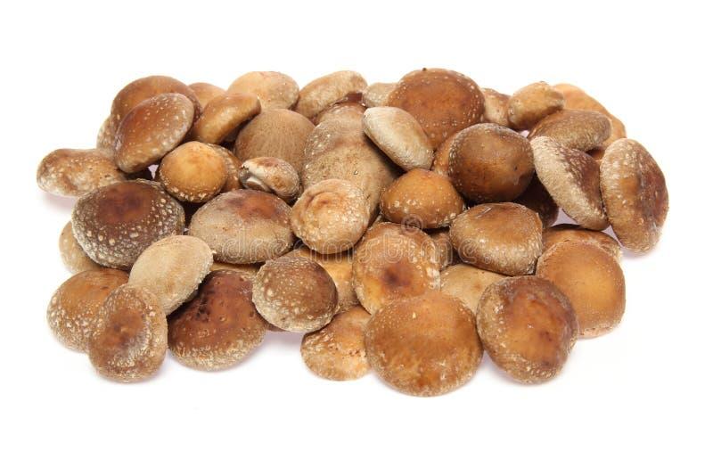 Brwon蘑菇在白色背景中 库存图片