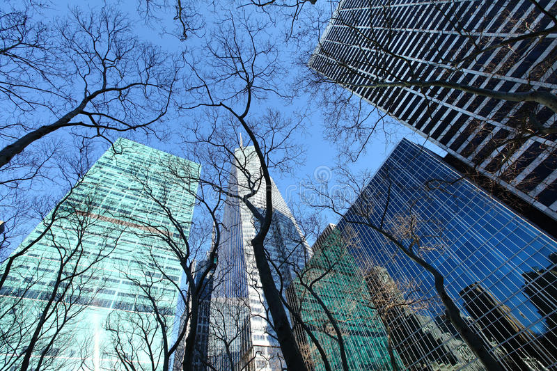 Bryant Park, New York city. Bare trees and blue sky as we look straight up in Bryant Park, New York city, Manhattan royalty free stock photos