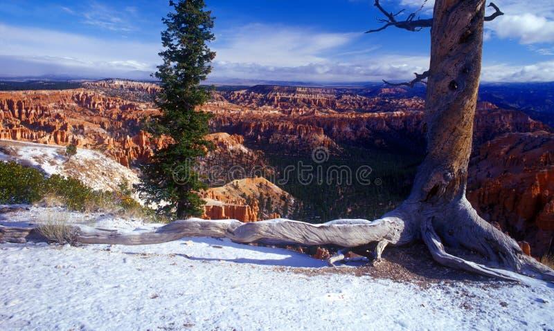 bryce国家公园雪 库存图片