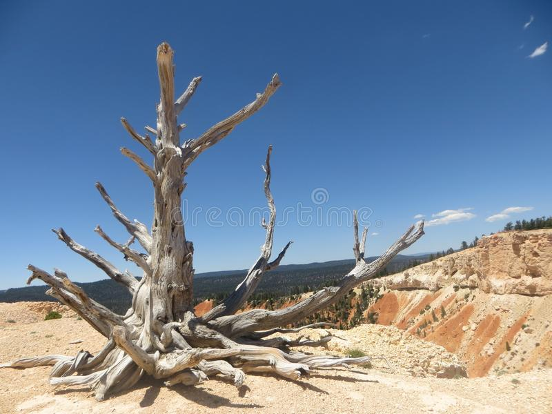 bryce photo stock
