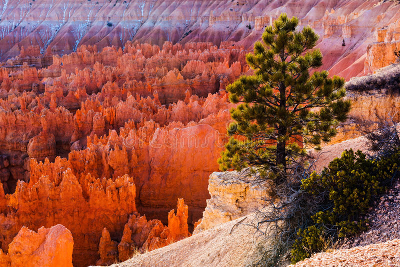 Bryce Amphitheater, Bryce Canyon National Park fotos de stock royalty free