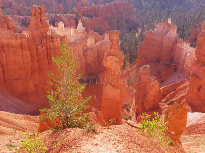 Download Bryce Canyon stock photo. Image of scenic, scenics, majestic - 11465616