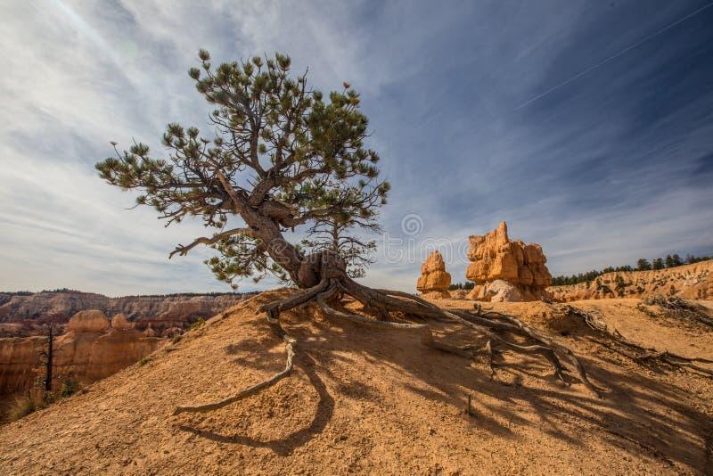 Bryce Canyon fotos de archivo libres de regalías