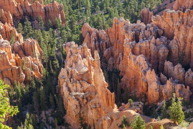 Bryce Canyon Hoodoo View royalty-vrije stock foto's