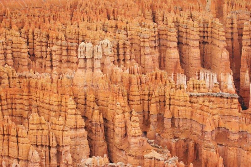 bryce canyon hoodoos fotografia royalty free