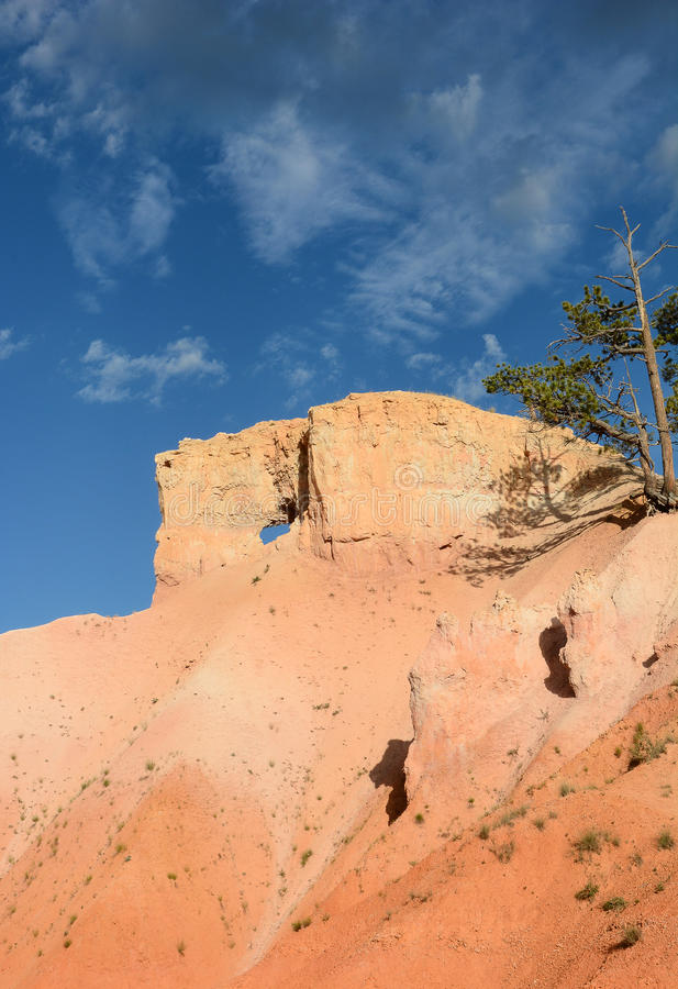 Bryce Canyon Landscape Vertical arkivfoton