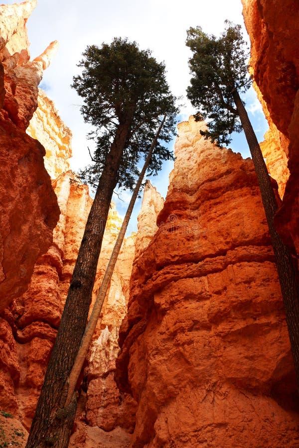 Bryce Canyon National Park is een Nationaal Park van Verenigde Staten in de Canionland van Utah stock fotografie