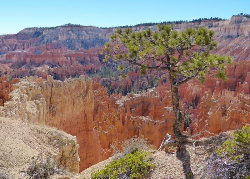 Bryce Canyon National Park Scenic stock fotografie