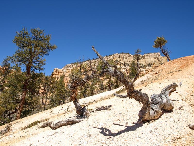 Bryce Canyon National Park Utah, Etats-Unis image stock