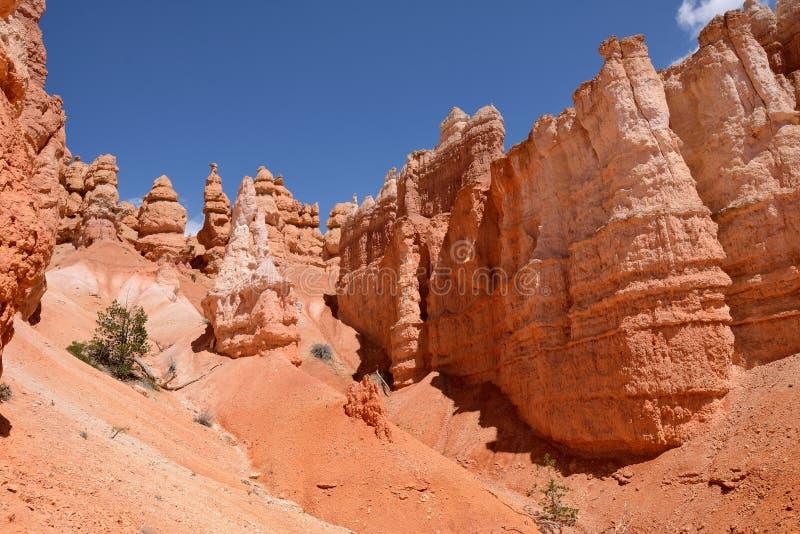 bryce jar hoodoos park narodowy zdjęcie stock