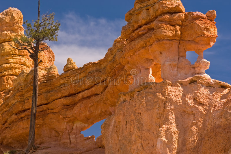 bryce kanionie park narodowy obraz royalty free