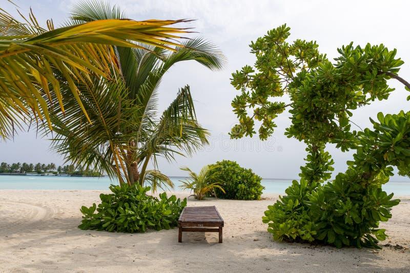 Bryczka hol z oceanów drzewami i krajobrazem zdjęcia royalty free