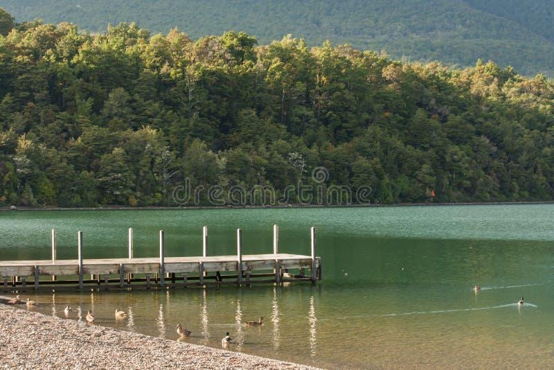 Brygga på sjön Rotoiti, Nelson Lakes National Park royaltyfri fotografi