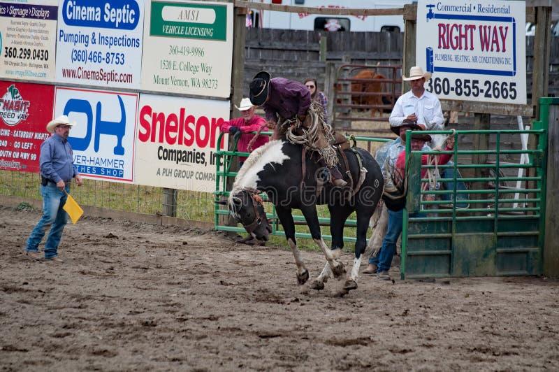 Brykać bronco końskiego kowbojskiego rodeo obrazy stock