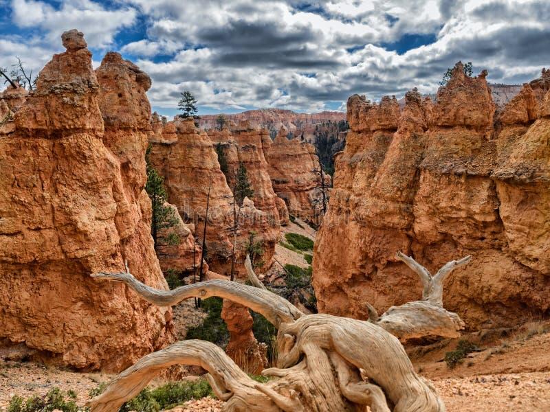 Bryka jaru hoodoos Navajo ślad, Utah obrazy royalty free