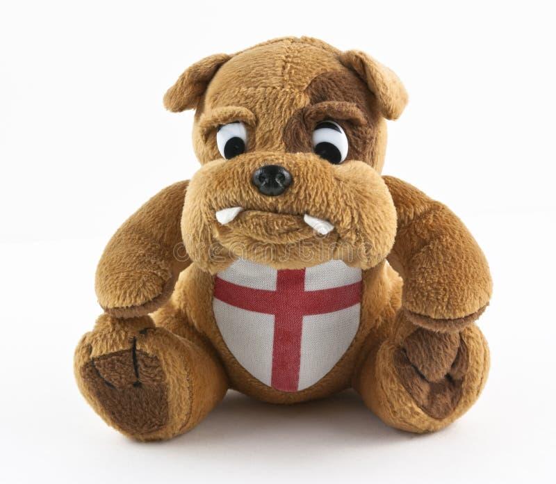 brytyjski buldog obraz royalty free