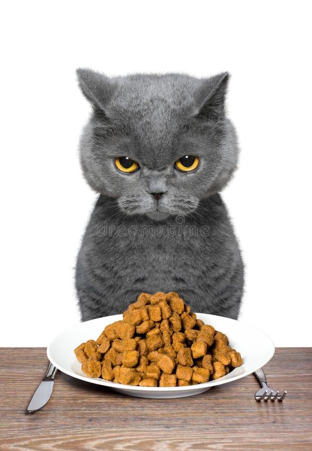 Brytyjski kot iść jeść obraz stock