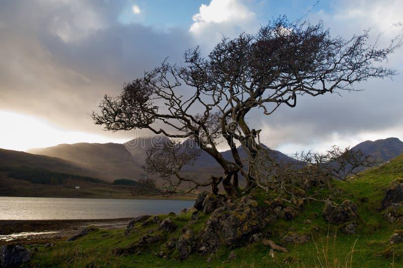 brzeg drzewo obrazy royalty free