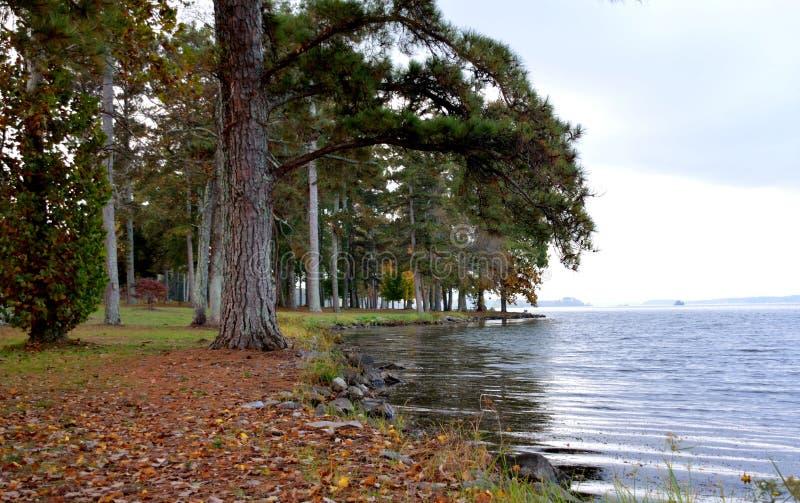 Brzeg jeziora przy parkiem zdjęcia royalty free