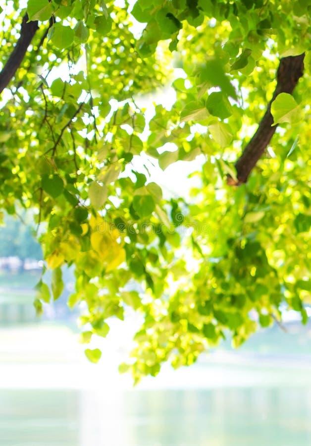 Brzeg jeziora zieleni drzewa w światłach słonecznych zdjęcia royalty free