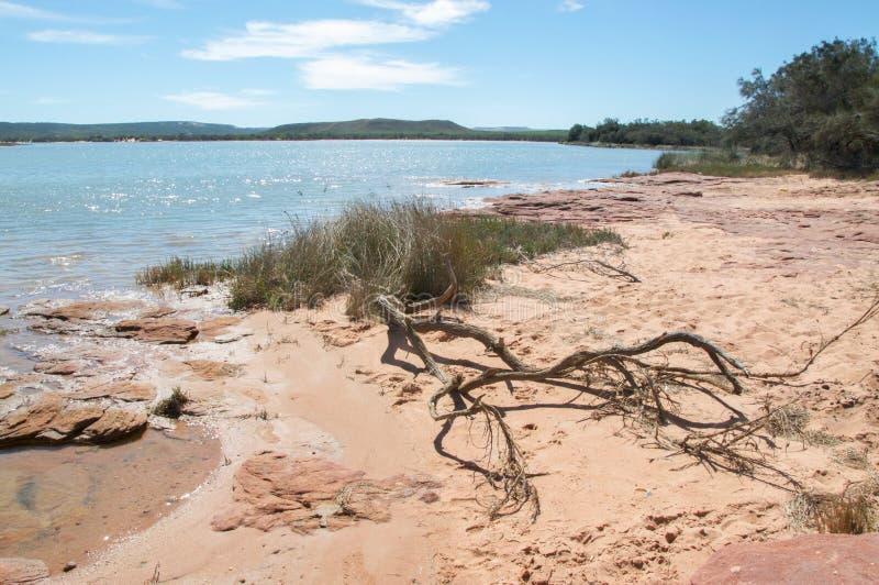 Brzeg Rzeki: Murchison rzeka fotografia stock