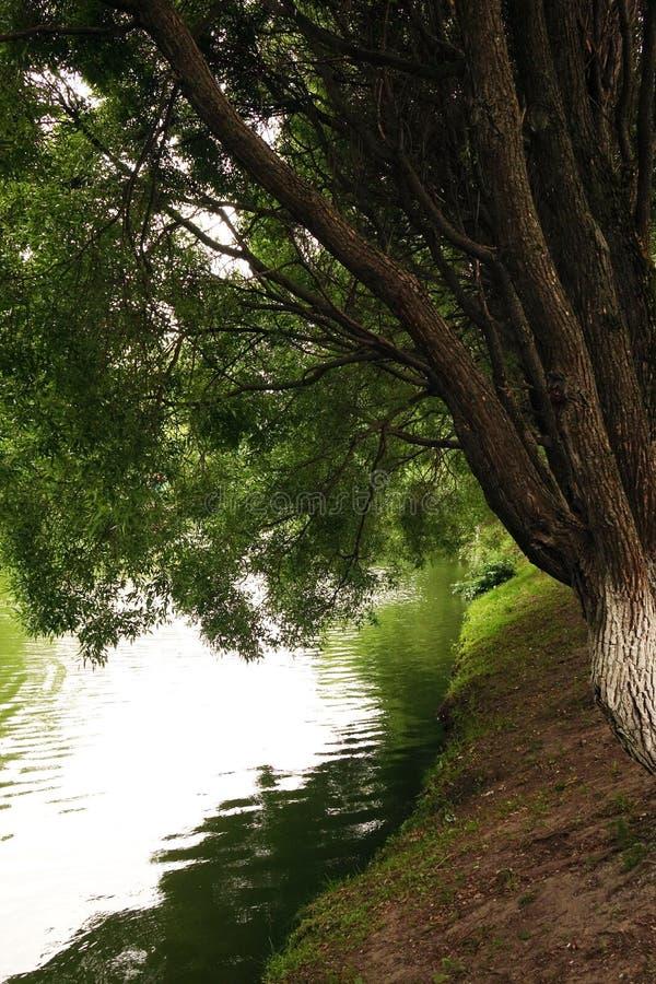 Brzeg staw drzewa nad woda Krajobraz las lub park z jeziorem lub rzeką obraz royalty free
