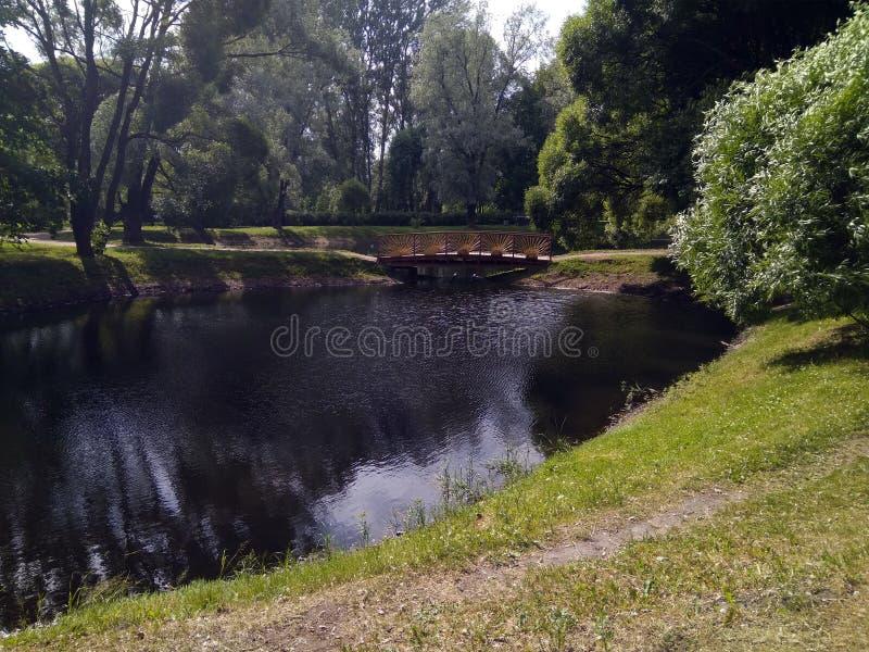 Brzeg staw w parku w lecie fotografia stock