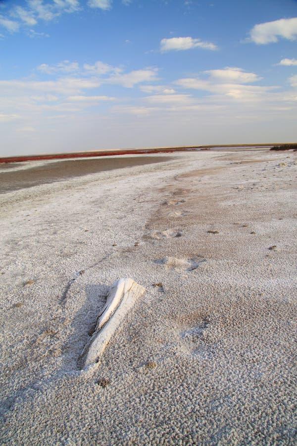 brzegowej jeziora soli słony piasek zdjęcie stock